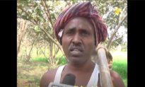 Trồng 10.000 cây trong 15 năm, người đàn ông biến vùng đất cằn cỗi thành vườn cây ăn quả