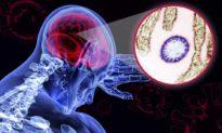 Virus Nipah gây tử vong cao gấp 75 lần so với COVID-19 có khả năng trở thành đại dịch mới