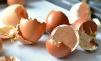 10 công dụng kỳ diệu của vỏ trứng để chăm sóc da và ngăn ngừa côn trùng