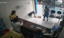 Chú chó hoang tự đi vào phòng khám thú y để được giúp đỡ