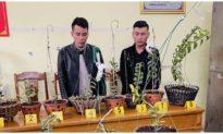 2 thanh niên Vĩnh Phúc lái ôtô tới Thanh Hóa trộm lan đột biến trị giá 1,8 tỷ đồng