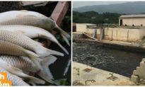 Nhà máy ở Thanh Hóa xả thải khiến cá tôm chết la liệt trên sông