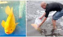 Người đàn ông ở Nghệ An thả cá mú vàng quý hiếm về biển sau 15 ngày kỳ công nuôi dưỡng