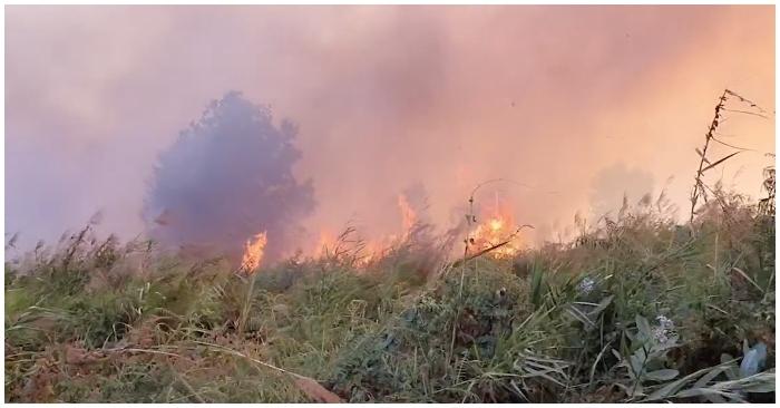Cánh đồng rộng 10 ha gần Công ty Samsung ở TP. HCM bất ngờ bốc cháy
