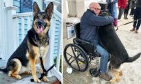 Chó chăn cừu Đức nhanh trí cứu mạng chủ nhân bị đột quỵ