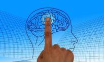 Tư duy ngôn ngữ con người hình thành trong não bộ 25 triệu năm trước, nguồn gốc con người cần nghiên cứu lại?