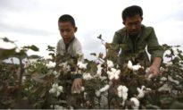 Trong cơn bão 'bông Tân Cương', từ doanh nghiệp cho tới cá nhân Trung Quốc đều phải thể hiện lòng trung thành