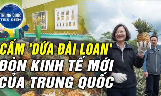 TQ TIÊU ĐIỂM - Cấm nhập khẩu dứa Đài Loan - CHIÊU BÀI KINH TẾ mới của Trung Quốc