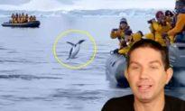 'Chạy trốn' sự truy đuổi của đàn cá voi sát thủ, chim cánh cụt sợ hãi nhảy tót lên thuyền du lịch