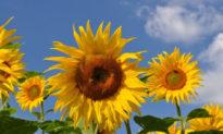 'Thăng hoa' trong nghịch cảnh cuộc đời