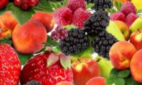 Thực phẩm biến đổi gen GMO đang âm thầm phá hủy thế hệ tương lai