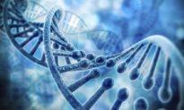 Hơn cả một mối đe dọa: Trung Quốc thu thập DNA của người Mỹ để làm gì?