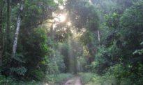 Hệ sinh thái rừng Amazon bị đe dọa nghiêm trọng