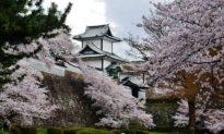 Nhật Bản vừa có hoa anh đào nở rộ sớm nhất trong 1.200 năm trở lại đây, có phải do biến đổi khí hậu?