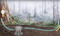 """Mạng lưới kết nối của cây cối trong """"Thế giới ngầm"""", sự liên kết với sự sống con người"""