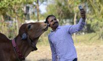 Tình trạng đáng lo ngại về nhiều người chết do mải chụp ảnh 'tự sướng'