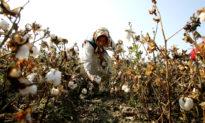 Trung Quốc 'bán buôn' nô lệ lao động Tân Cương, mỗi lô từ 50 đến 100 người