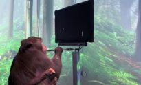 Công ty của Elon Musk trình diễn công nghệ chip não Neuralink giúp khỉ chơi trò chơi điện tử