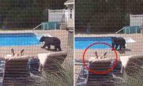 Ngủ gật bên hồ bơi mà không biết gấu lẻn vào, người đàn ông giật mình sợ hãi khi chứng kiến điều này