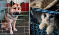 Từ cuối tháng 4/2021: Đánh đập chó mèo bị phạt đến 3 triệu đồng