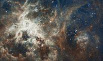 Bộ não của chúng ta có thể giúp chứng minh vũ trụ có ý thức không?
