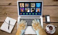 Những sự cố 'cười ra nước mắt' khi họp online mùa Covid