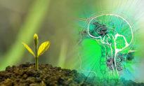 Bí ẩn: Suy nghĩ của con người có thể tác động lên thực vật