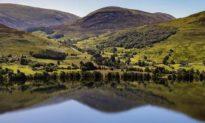 """Scotland có thể trở thành """"quốc gia tái hoang dã"""" đầu tiên trên thế giới. Họ đã làm như thế nào?"""
