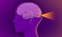 Hệ miễn dịch bảo vệ não bộ như thế nào?