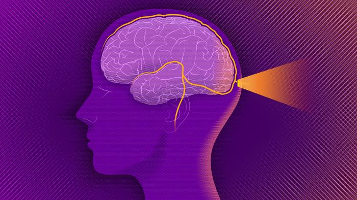 Hệ miễn dịch bảo vệ não bộ khác hẳn với bảo vệ các bộ phận khác của cơ thể