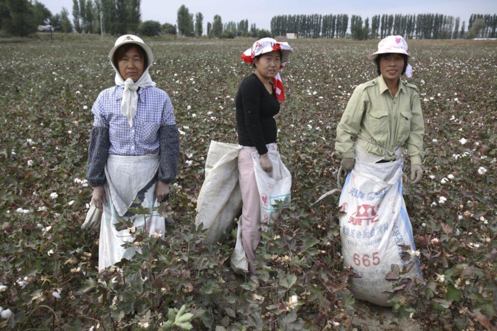 Nhiều công ty lớn Nhật Bản ngừng sử dụng bông Tân Cương vì vấn đề nhân quyền