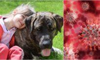 Phát hiện một loại Coronavirus ở chó xuất hiện ở một số người nhập viện