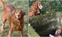Tình bạn trung thành: Chú chó nhịn đói 7 ngày để giải cứu người bạn bị mắc kẹt