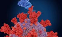 Biến thể Ấn độ là coronavirus đột biến lây nhiễm nhất hành tinh?