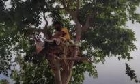 Chàng trai Ấn Độ tự cách ly hơn 10 ngày trên cây vì mắc COVID-19