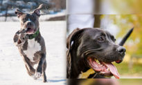 'Cứu vật vật trả ơn' - Hai chú chó trở thành 'dũng sĩ' cứu mạng chủ nhân