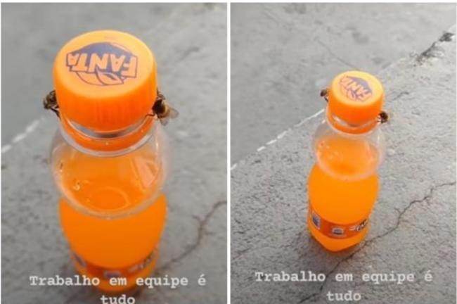 'Có kẻ trộm nước ngọt của tôi': Hai con ong hợp sức mở nắp chai nước ngọt