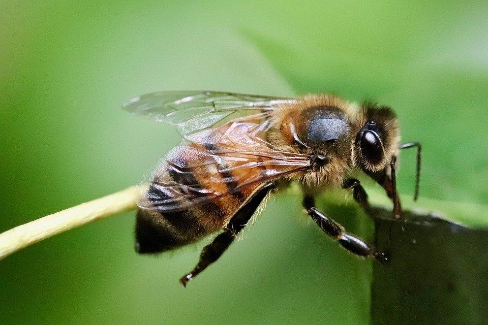 Hơn 500 triệu con ong ở Brazil chết trong vòng 3 tháng... Bao giờ đến lượt loài người?