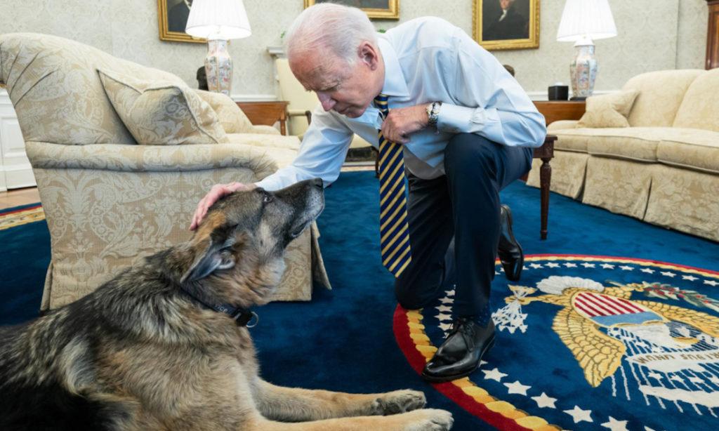Chia buồn vì chó cưng của ông Biden qua đời, bà Thái Anh Văn bị truyền thông Trung Quốc tấn công