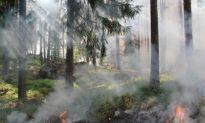 Nghệ An: Cảnh báo cháy rừng cấp 'Cực kỳ nguy hiểm'