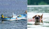 Chú chó bơi suốt 11 tiếng trên biển để tìm người giải cứu chủ nhân