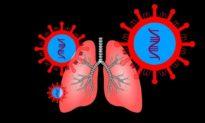 COVID-19 tàn phá phổi của con người như thế nào?