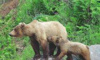 Cứu chó cưng, cô gái Mỹ 17 tuổi tay không đối đầu với gấu