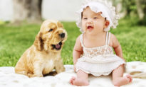 10 lý do tại sao nuôi chó tốt cho sức khỏe tinh thần của con người