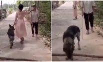 Sợ người mù té ngã, chú chó vội quay lại 'dời' vật cản để dọn đường