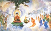 Đức Phật Thích Ca Mâu Ni (Phần 8): Ban đầu truyền Pháp, độ 5 tỳ kheo [Radio]