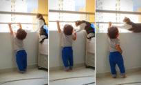 Mèo thông minh biết ngăn em bé trèo lên ban công (Video)