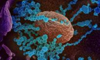 Biến thể 'bất thường' Lambda có thể kháng được vaccine COVID-19: Các nhà nghiên cứu