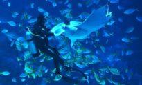 'Giúp với, tôi đau ở đây này': Cá quỷ khổng lồ bơi đến chỗ thợ lặn nhờ 'tháo giúp lưỡi câu'