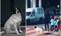 Thấy các em nhỏ cần băng qua đường, chú chó tuần tra tự động lao ra... dẹp đường